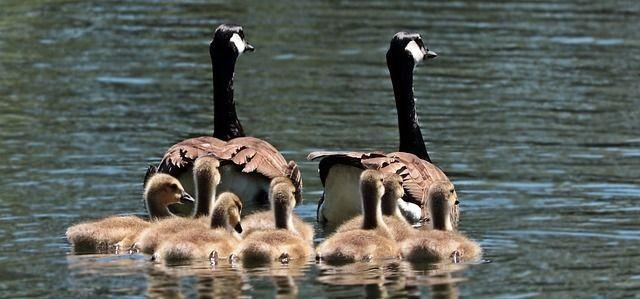 familieopstellingen-hsp-hooggevoelig-hoogsensitief